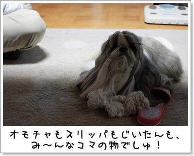 2010_0401_185826AA.jpg