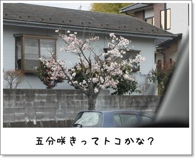 2010_0411_135505AA.jpg