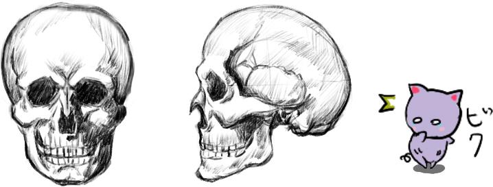 頭蓋骨全体
