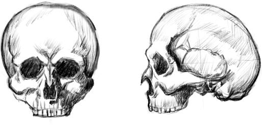 頭蓋骨あたま