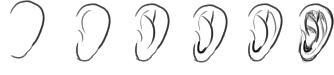 耳の描き順