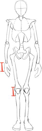 ひざの大きさの目安