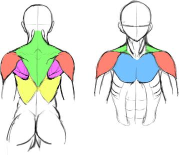 肩関連の筋肉説明