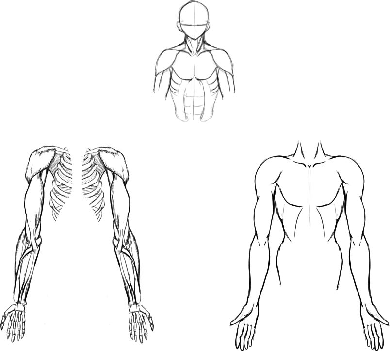 腕の筋肉説明01