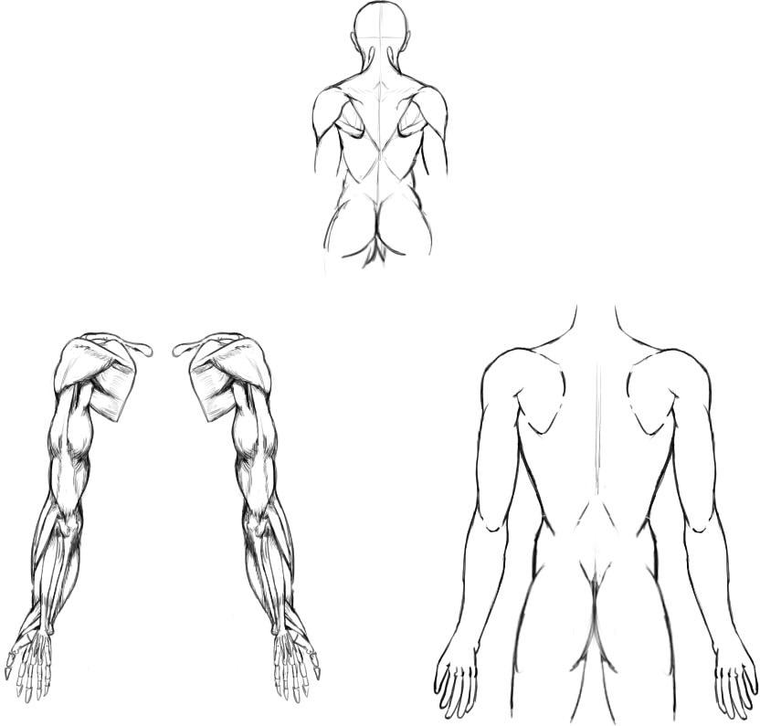 腕の筋肉説明02