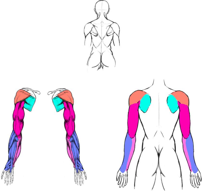 腕の筋肉説明04