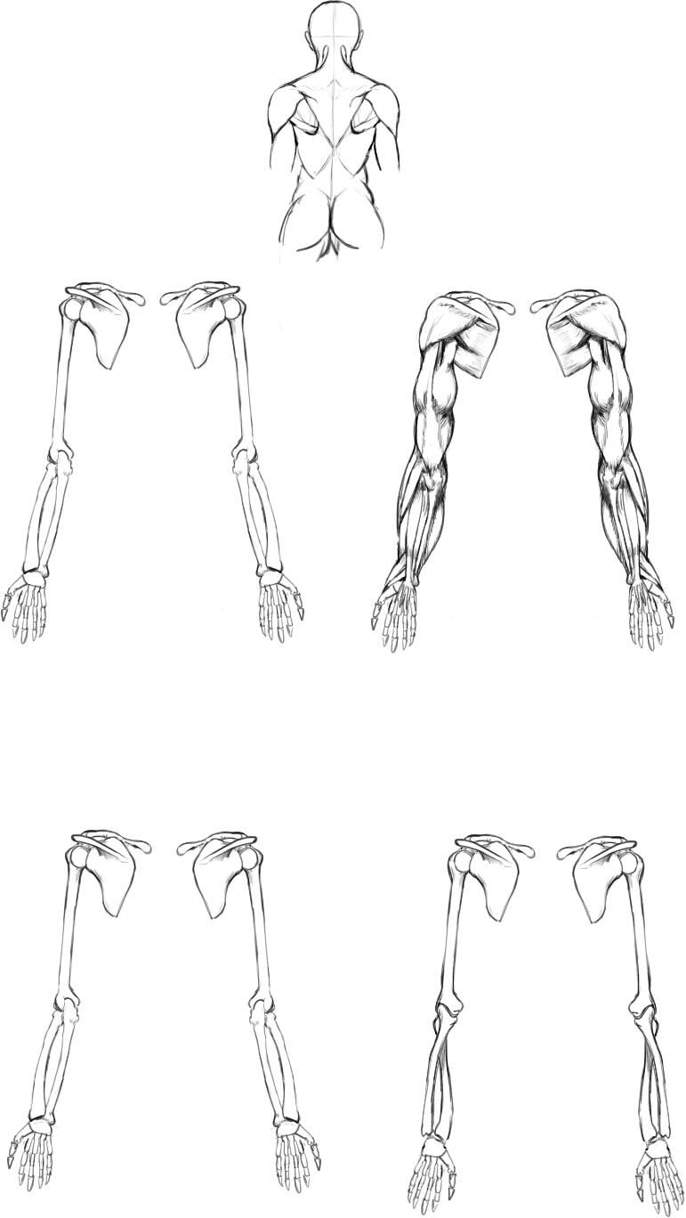腕の筋肉説明06
