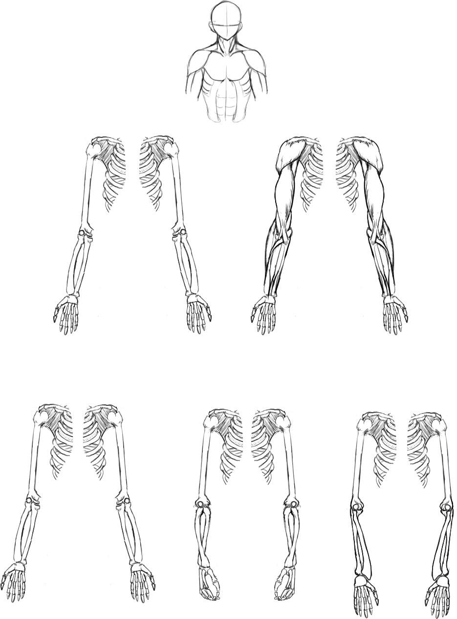 腕の筋肉説明05