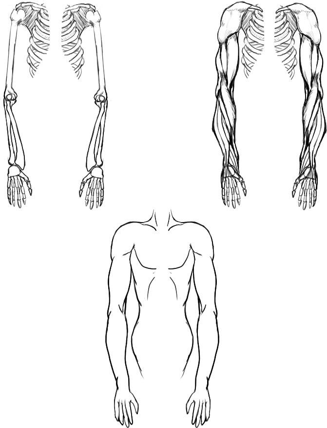 腕の筋肉説明08