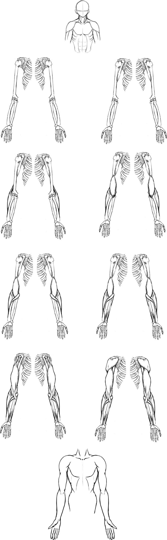 腕の筋肉説明07