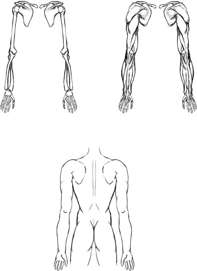 腕の筋肉説明12