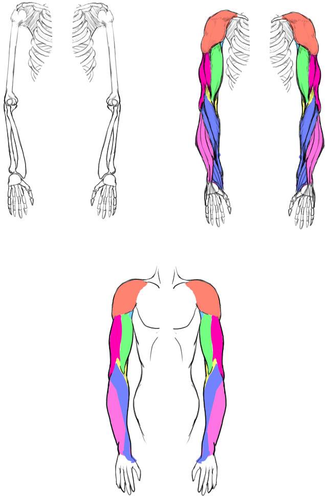 腕の筋肉説明10