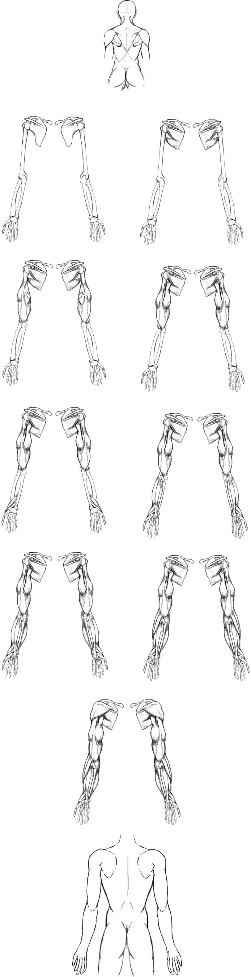 腕の筋肉説明11