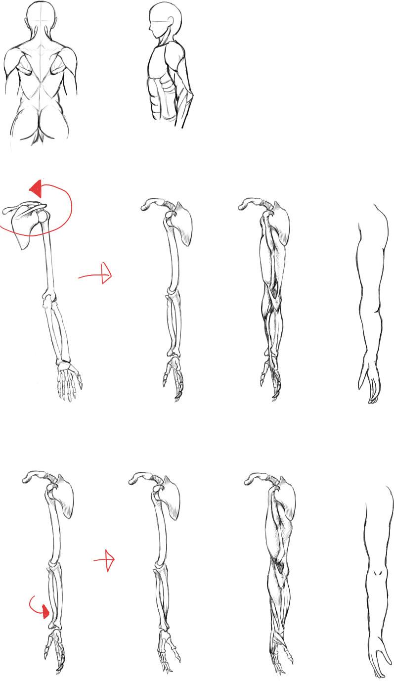 腕の筋肉説明15