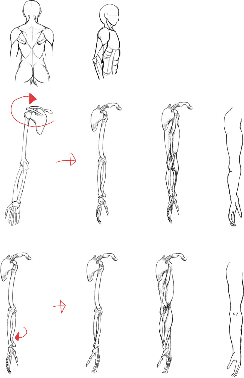 腕の筋肉説明16