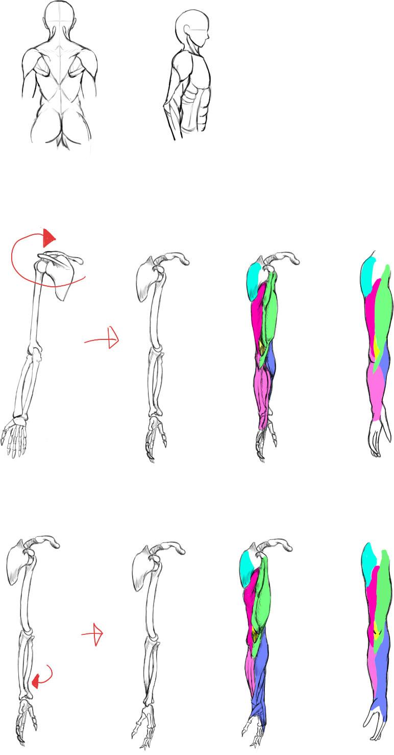 腕の筋肉説明18