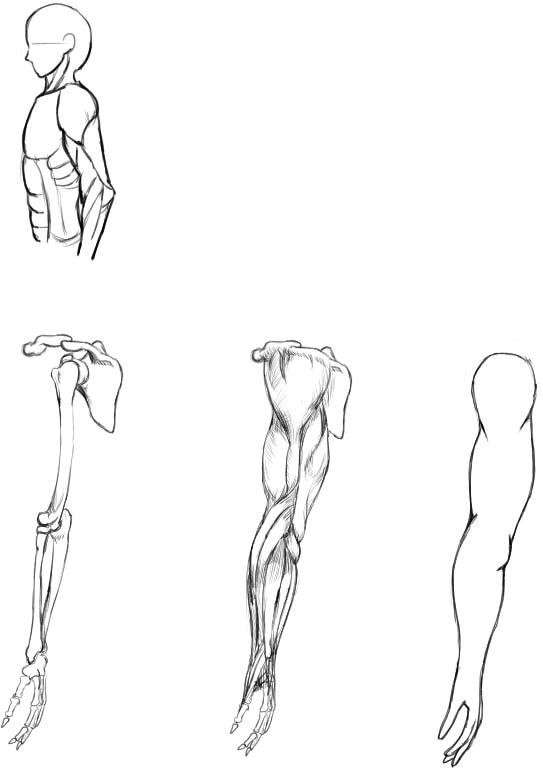 腕の筋肉説明20