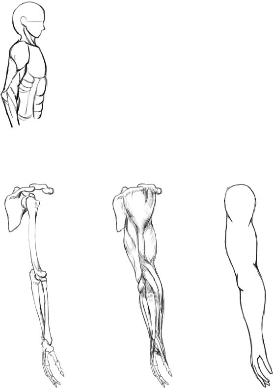 腕の筋肉説明19