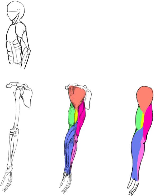 腕の筋肉説明22