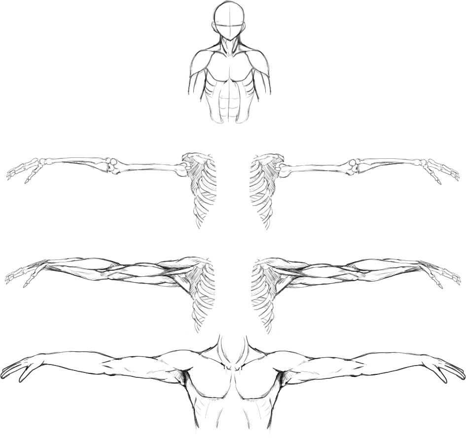 腕の筋肉説明23