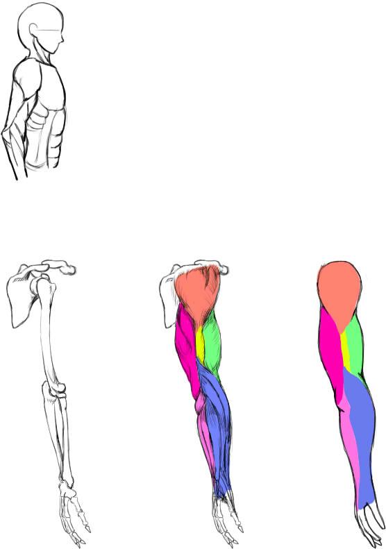 腕の筋肉説明21