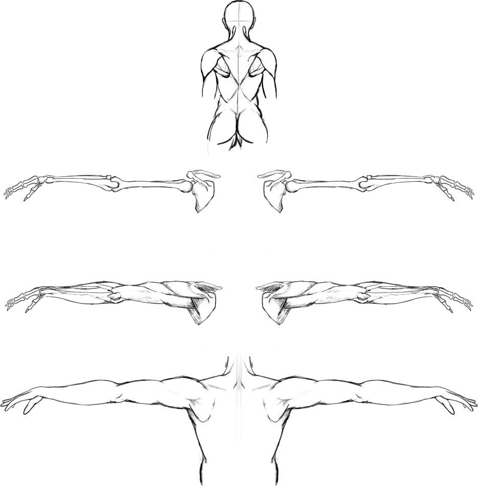 腕の筋肉説明24