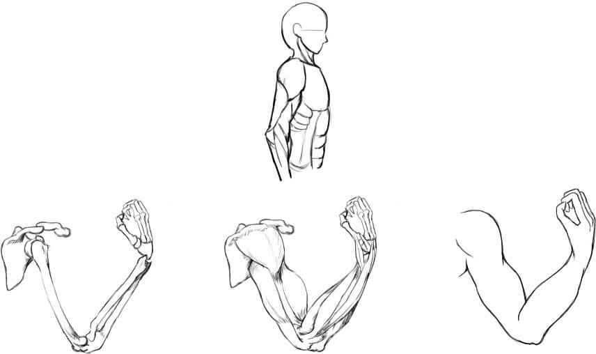 腕の筋肉説明27
