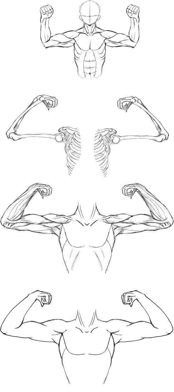腕の筋肉説明29