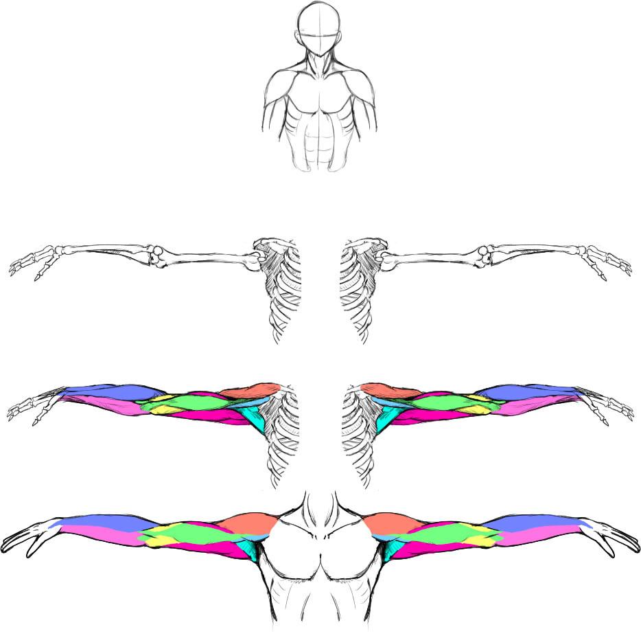腕の筋肉説明25