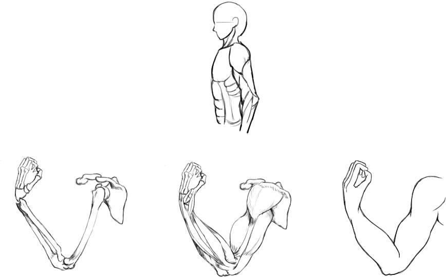 腕の筋肉説明28