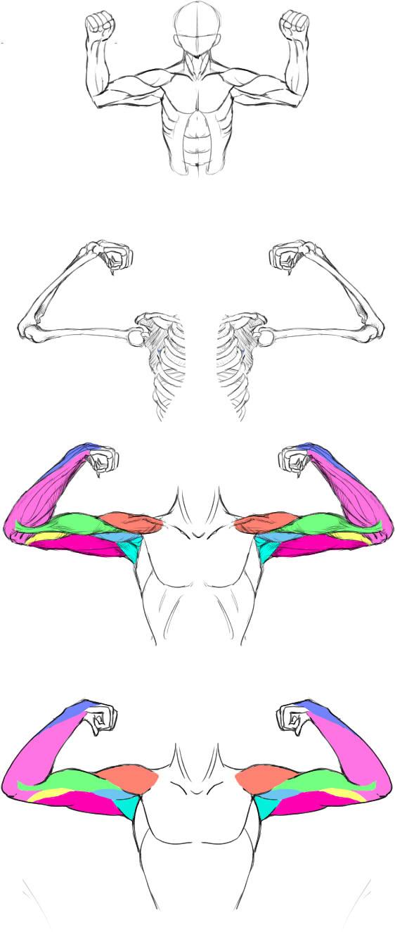 腕の筋肉説明32
