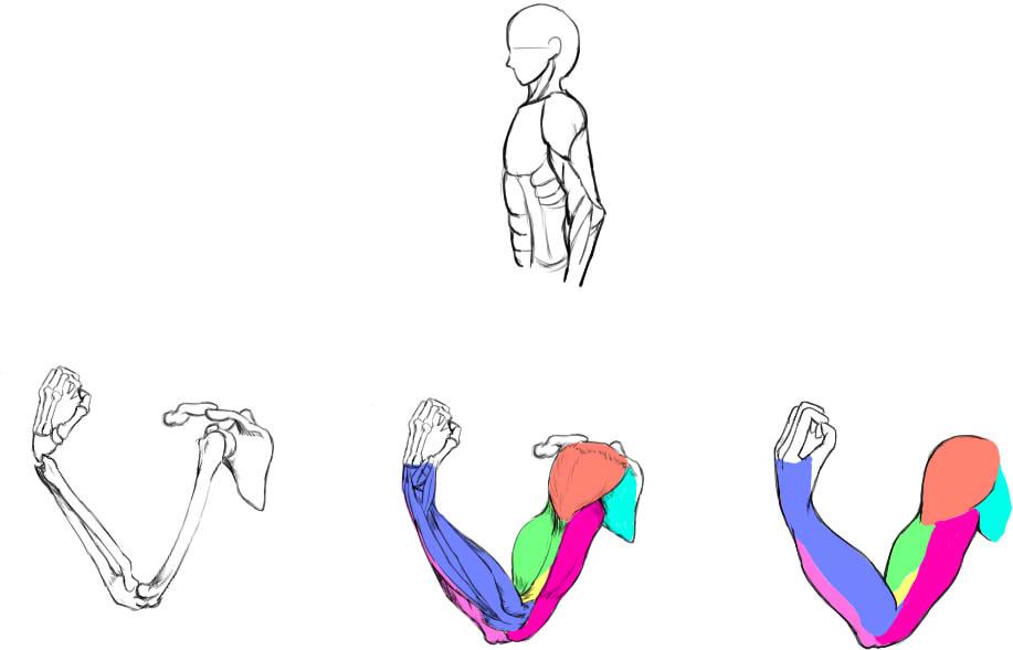 腕の筋肉説明31