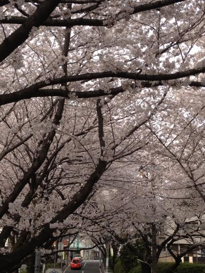 桜(ブログ用③)