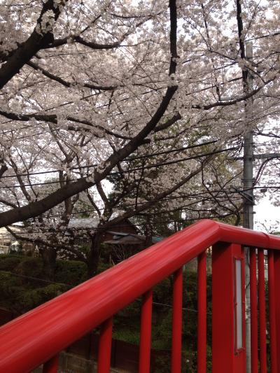 桜(ブログ用②)