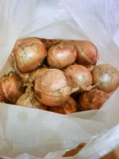 2012.6.30畑収穫④たまねぎ