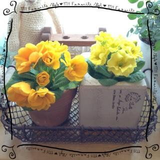 2013.1.18リビングのお花②