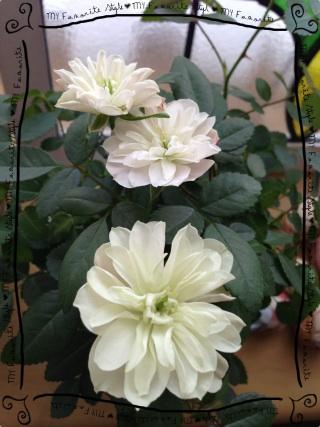 2013.1.18リビングのお花⑤
