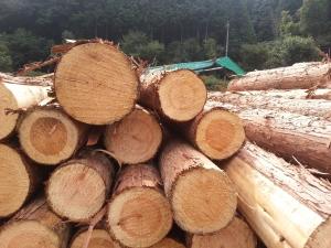 141007木材