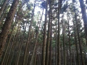 141102かかり木