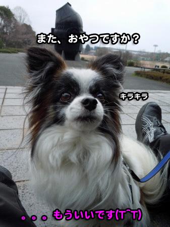 ぶりっこ10