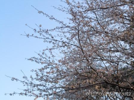 14青空と桜3
