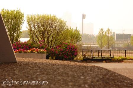 60㎜マクロで初散歩♪07