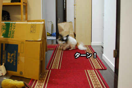 新シャンプーと迷子札07