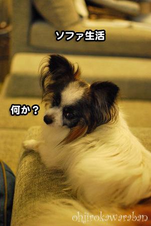 ソファ生活02
