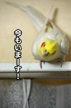 コタロウ三昧04