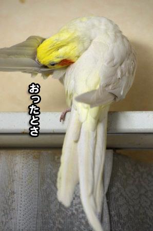 コタロウ三昧03