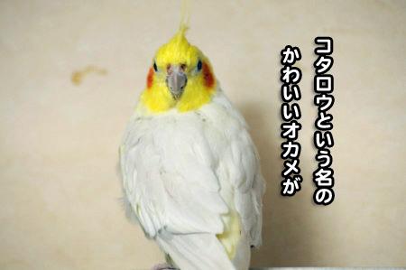 コタロウ三昧02