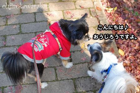 横浜と石神井公園♪10