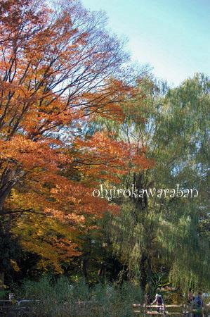 横浜と石神井公園♪08