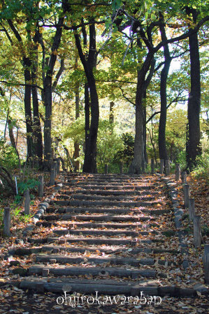 横浜と石神井公園♪09